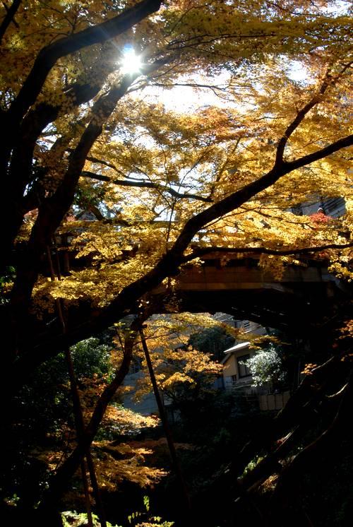こおろぎ橋の秋.jpg