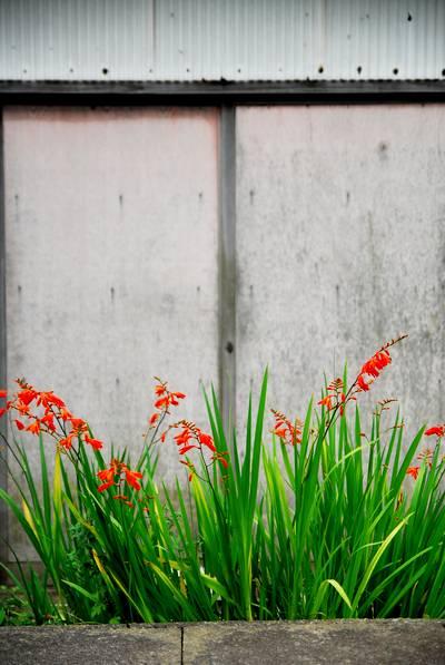 オレンジの花.jpg