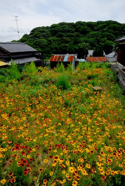 塩屋の空き地に咲く花.jpg