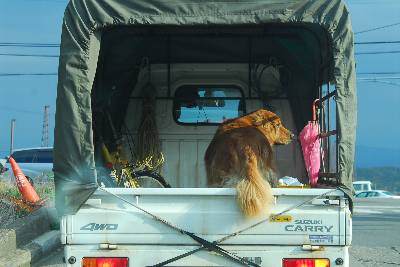 荷台に犬.jpg