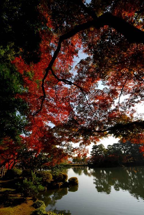 兼六園の紅葉2.jpg