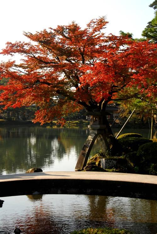 兼六園の紅葉5.jpg