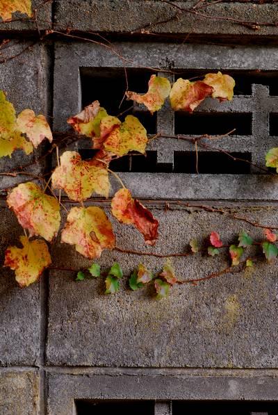 秋の日2.jpg