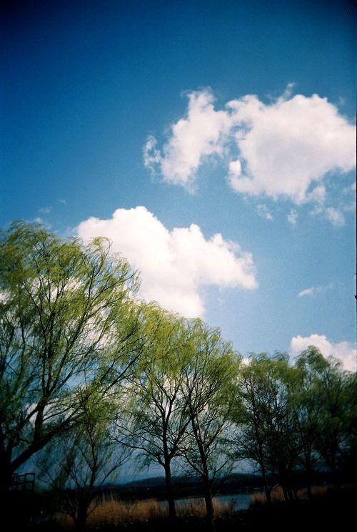 春の木場潟2.jpg