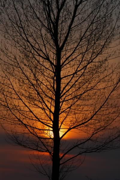 春の夕景2.jpg
