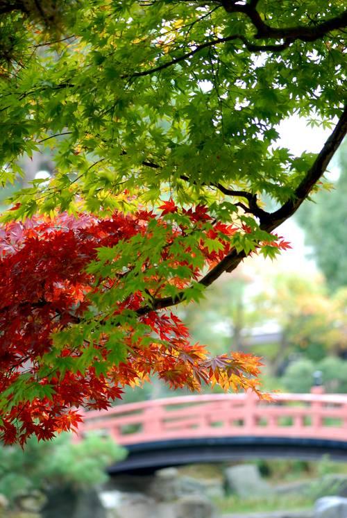 小松市の紅葉2.jpg
