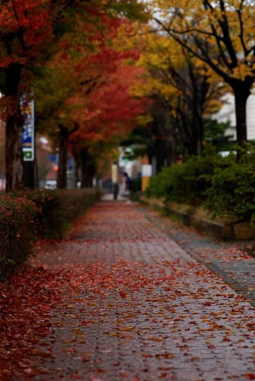 大聖寺の紅葉.jpg