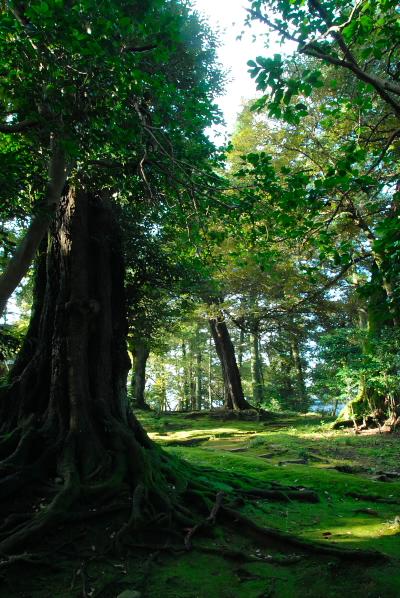 鎮守の森.jpg