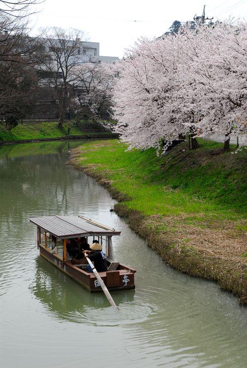 南加賀の桜8.jpg