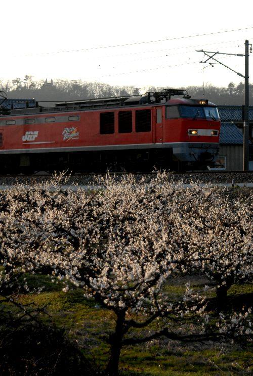 梅と貨物車.jpg