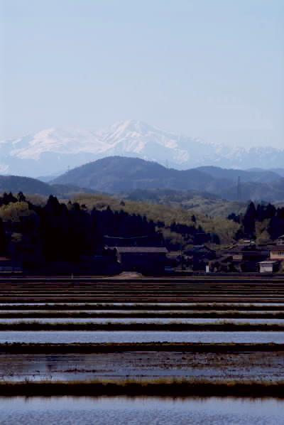 白山と水田.jpg