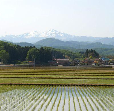 白山と水田2.jpg