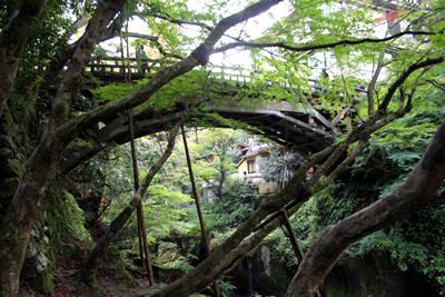 kourogi.jpg