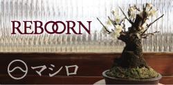 mashiro_banner.jpg